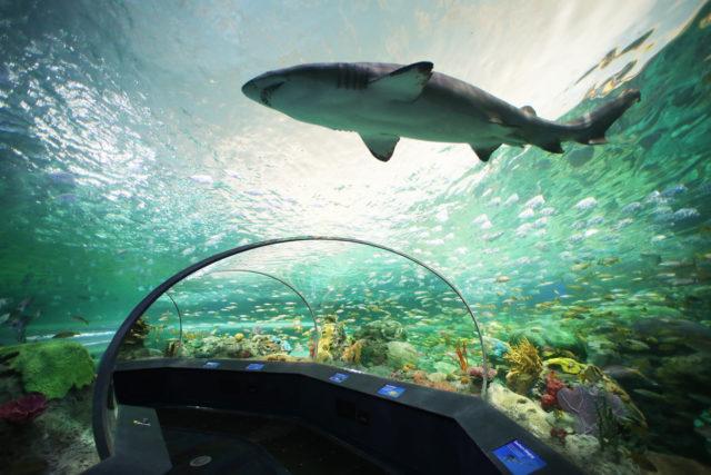 Shark in an aquarium.